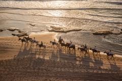 סוסים בחוף הים
