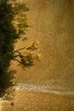 עץ בגשם