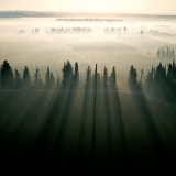 עצים בערפל