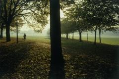 עצים בפארק