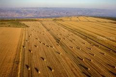 חציר בשדה