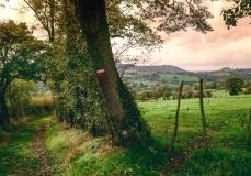 שביל ליד עצים