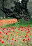 פרחים וגזע עץ