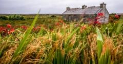 בית בודד בטבע