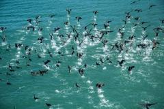 ציפורים בים