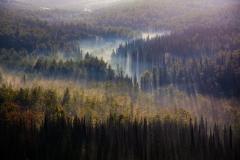 ערפל ביער