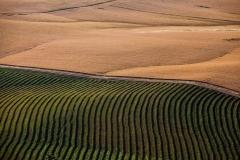 חקלאות חצי חצי