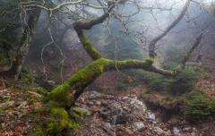 עץ מאוזן