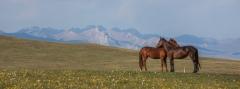 סוסים מחובקים
