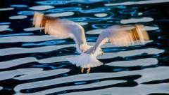 ציפור עפה בים
