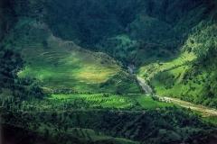 נוף ירוק בנאפל