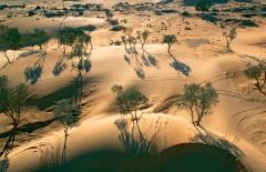 עצים במדבר