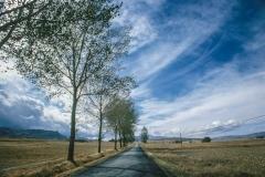 כביש עם עצים