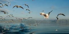 ציפורים בכינרת